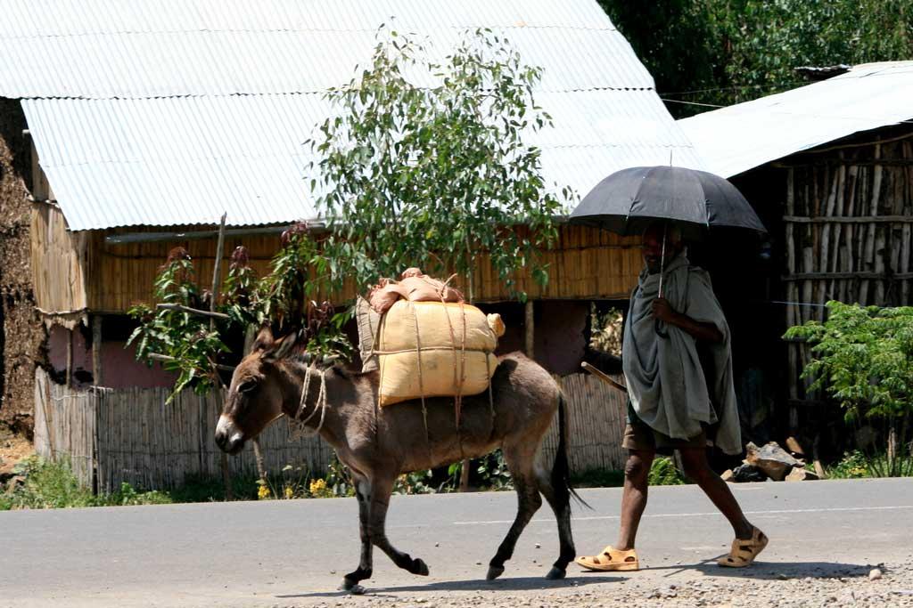 Donkey - Punda