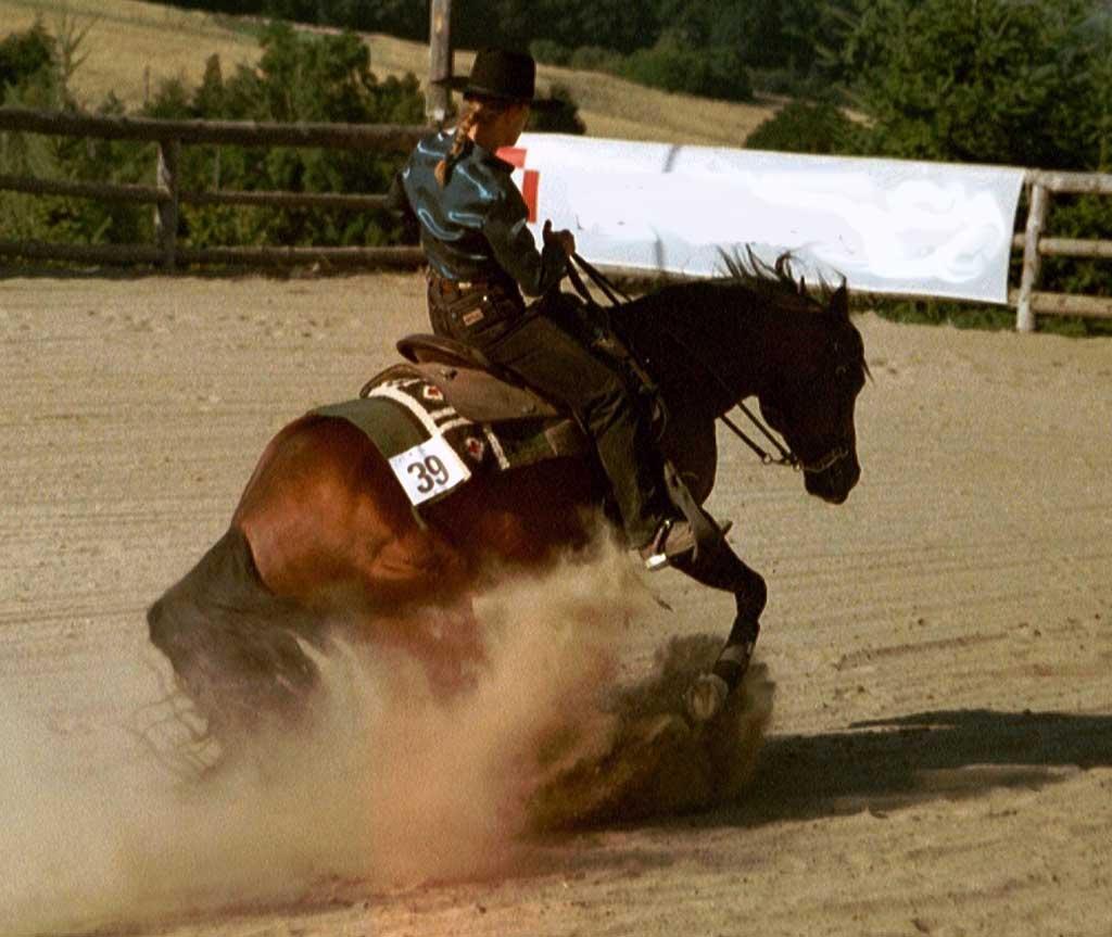Horse - Farasi