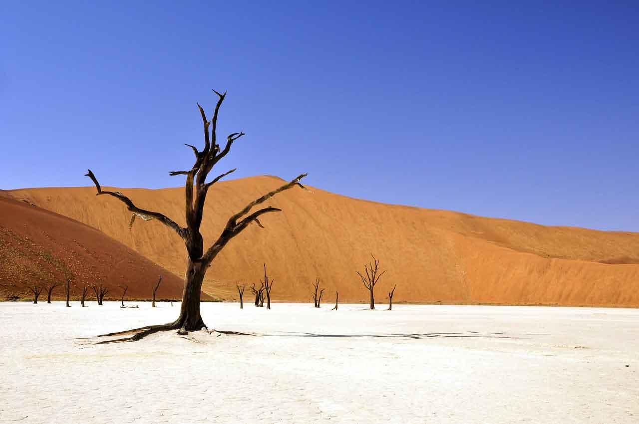 Desert - Jangwa