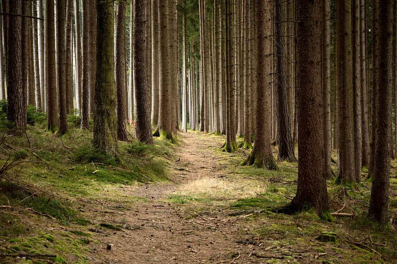 Forest - Msitu