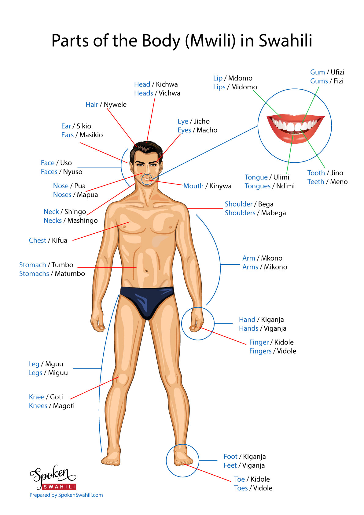 Parts Of The Body In Swahili