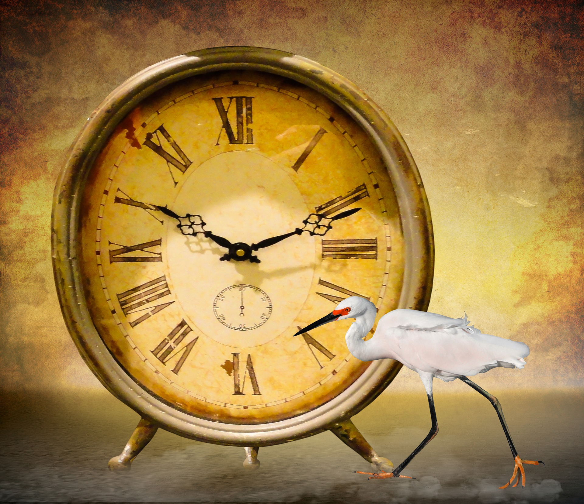 Bird In Front Of A Clock